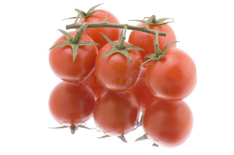 w górę biel zamknięty czerwony pomidor zdjęcia royalty free