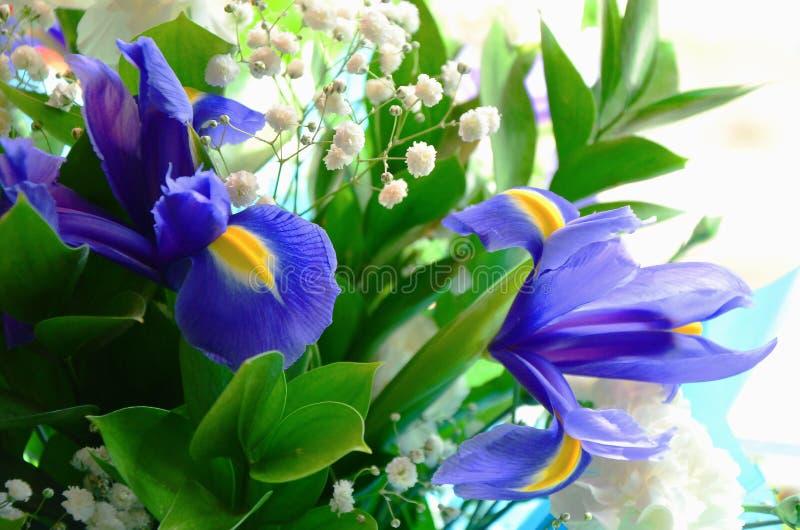 W górę bukieta świezi kwiaty błękitni irysy z żółtymi płatkami i zieleń trzonami zdjęcia stock