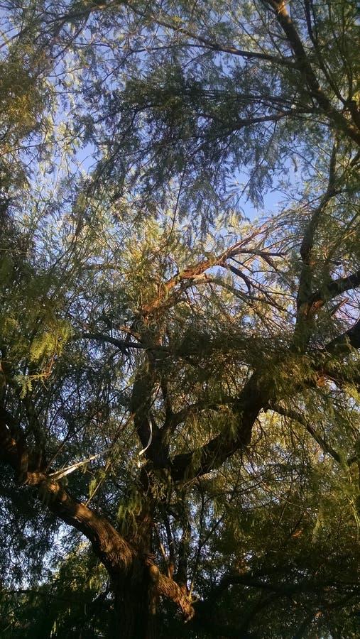 W górę drzewa obrazy royalty free