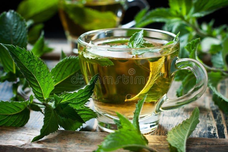 W górę filiżanki nowa herbata z ziele fotografia royalty free