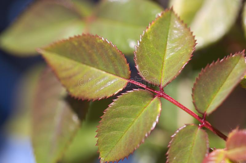 W górę niektóre wzrastał liście w ogródzie obrazy royalty free