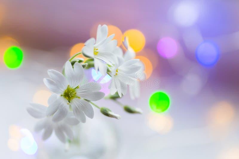 W górę pięknych białych kwiatów na światło dzienne zamazującym tle z kolorową girlandą zaświeca zdjęcie royalty free