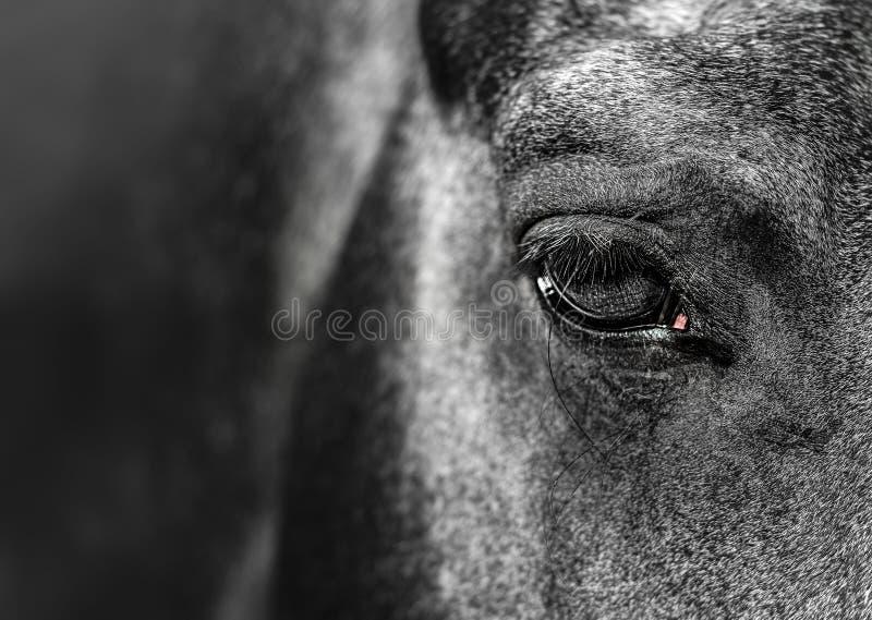 w górę portreta końska ostrość przy okiem zdjęcia stock