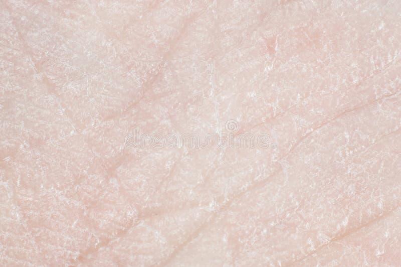 W górę skóry z pores na ludzkiej nodze, makro- obrazy stock