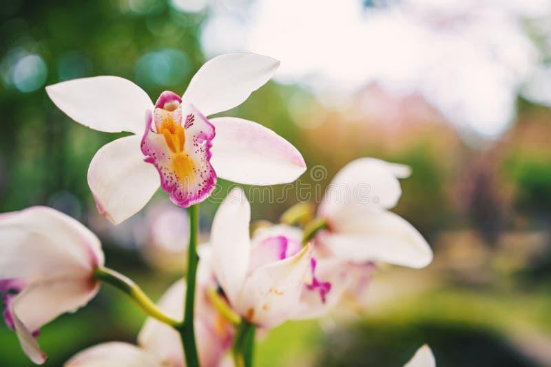 W górę strzał gałąź różowe łaciaste orchidee na zielonej bokeh naturze obrazy royalty free
