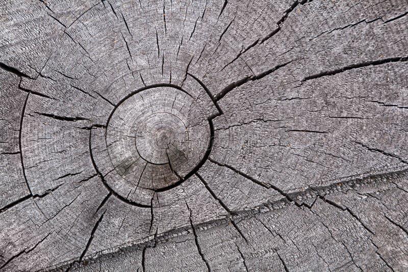 W górę szarość suszy drzewnego bagażnika fotografia stock