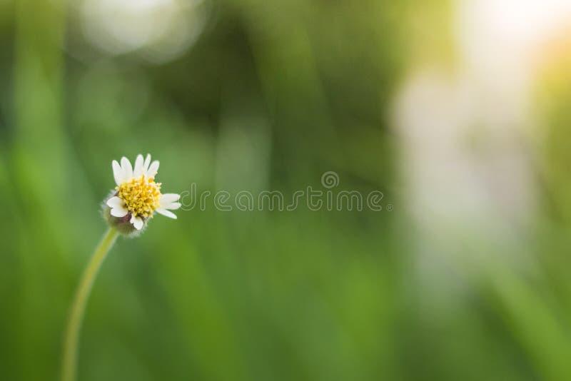 W górę trawa kwiatów fotografia royalty free