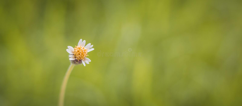 W górę trawa kwiatów fotografia stock