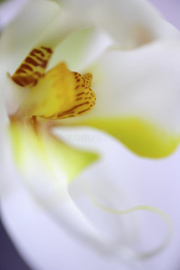 A w górę widoku biała orchidea i swój reprodukcja system zdjęcia stock