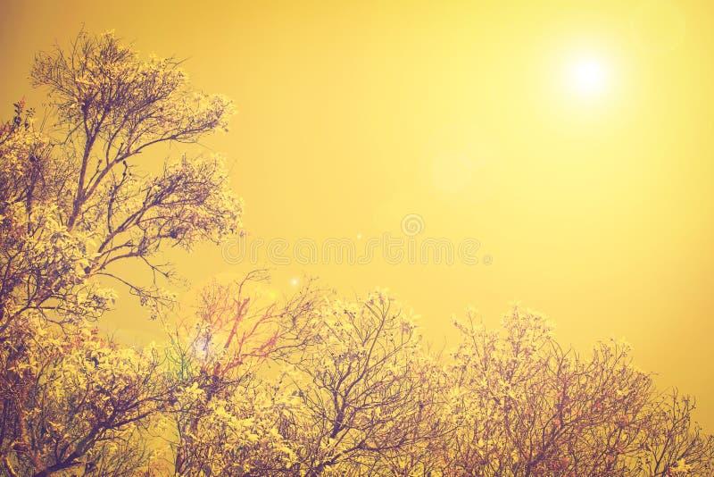 W górę widoku gałąź drzewa i słońca światło na zmierzchu niebie, rocznik w zdjęcie stock