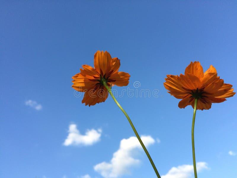 W górę wzrastać pięknych kwiaty obraz royalty free
