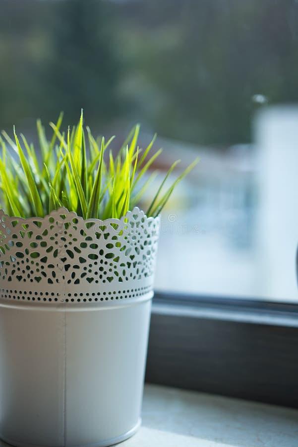 W górę Zielonego domu rośliny obrazy royalty free