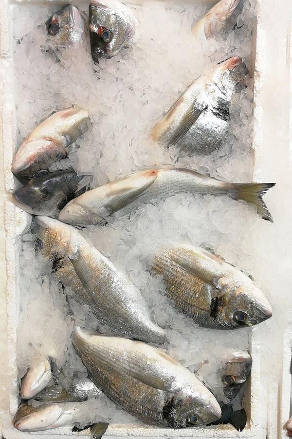W g?r? ?wie?ej och?odzonej ryby na lodzie dla sprzeda?y w rynku fotografia royalty free