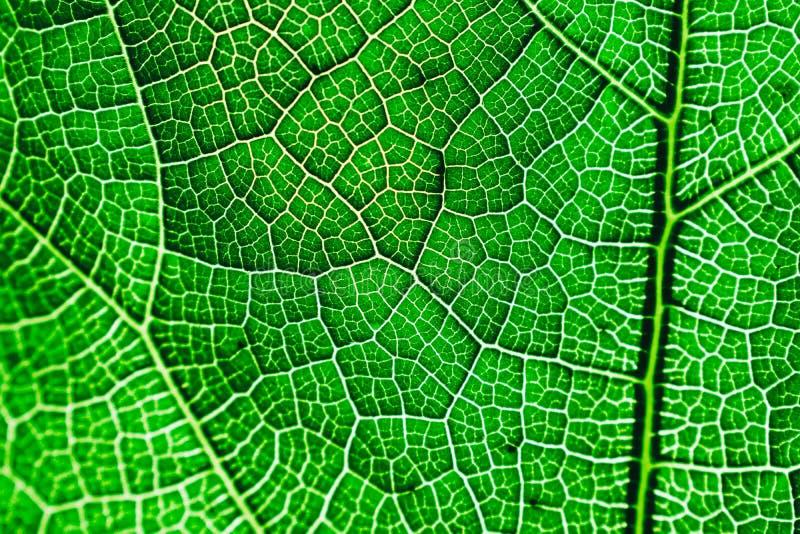W g?r? ?wie?ej zielonej li?? tekstury obrazy royalty free