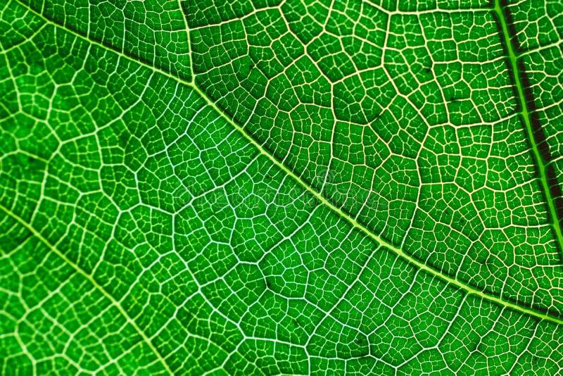W g?r? ?wie?ej zielonej li?? tekstury zdjęcie stock