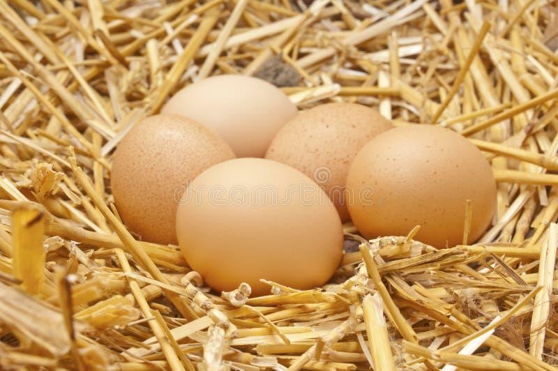 W gniazdeczku kurczaków jajka zdjęcie stock