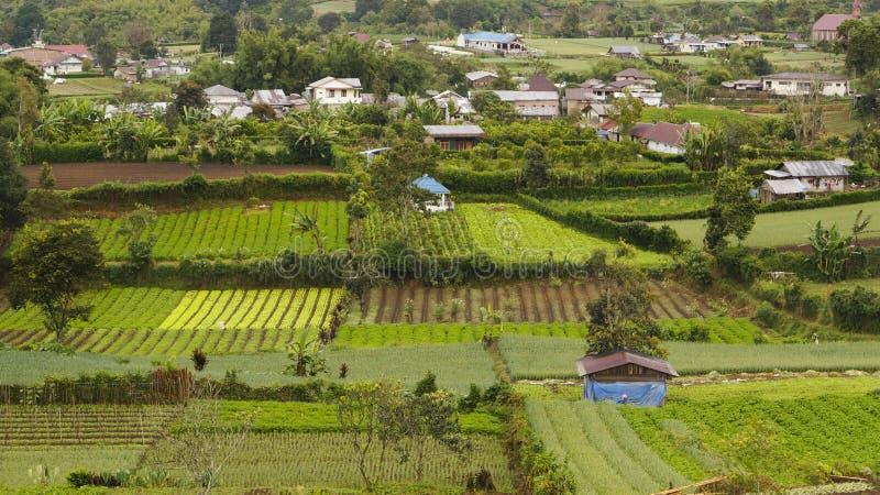 W Gundaling jarzynowi gospodarstwa rolne, Brastagi, Indonezja obraz royalty free