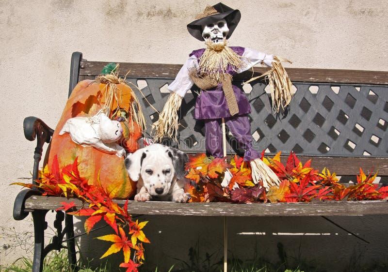 W Halloweenowej dekoraci dalmatyński szczeniak zdjęcia royalty free