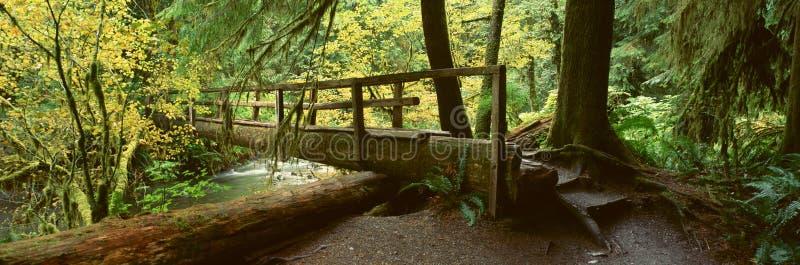 W Hoh Tropikalny las deszczowy drewniany Most obrazy stock