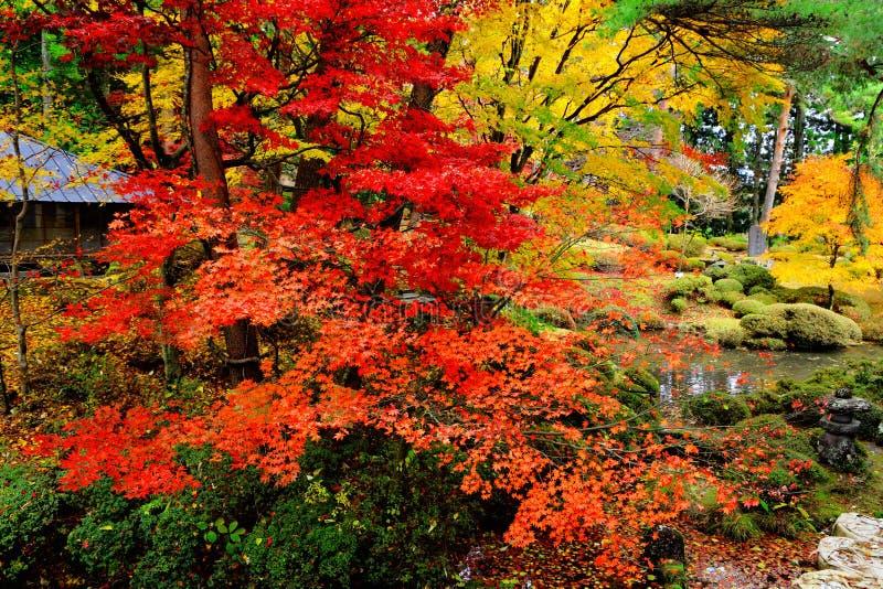 W Japończyka ogródzie klonowy drzewo obraz stock