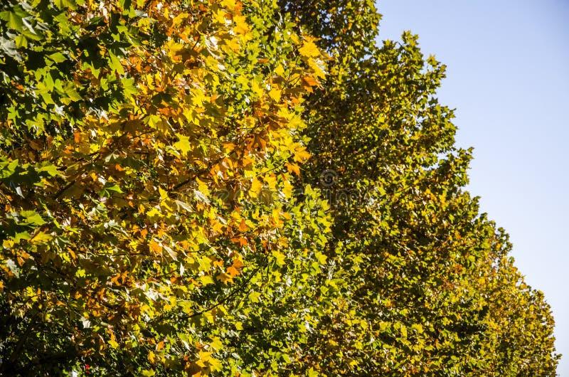 W jesieni, liście są czerwoni i żółci gdziekolwiek fotografia royalty free