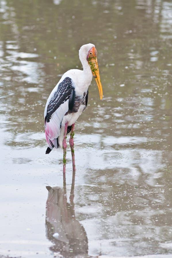 W jeziorze biały ptak
