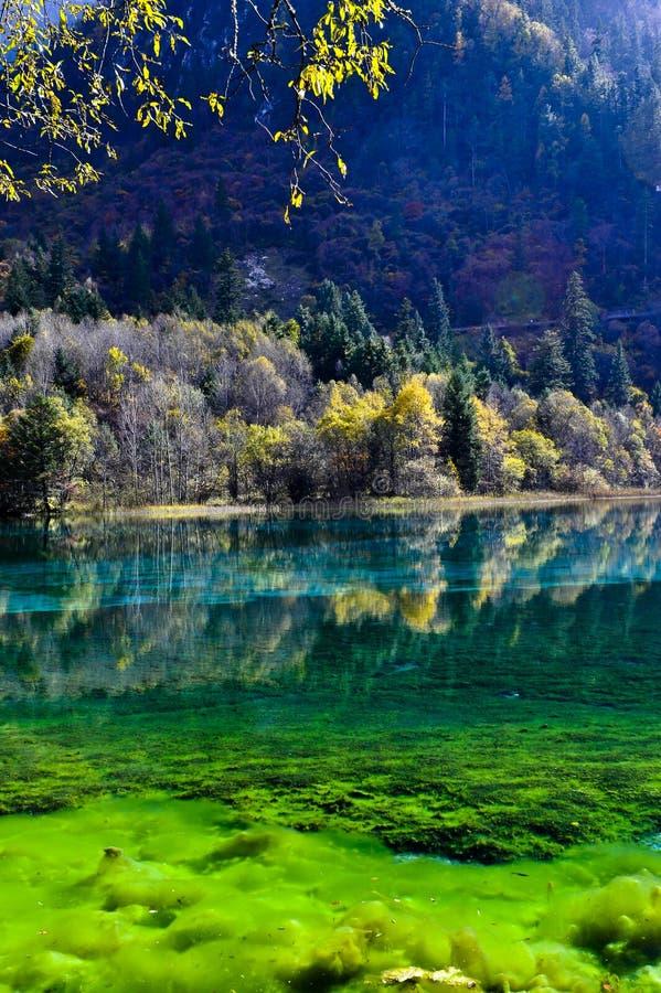 W Jiuzhaigou kolorowy jezioro zdjęcia stock