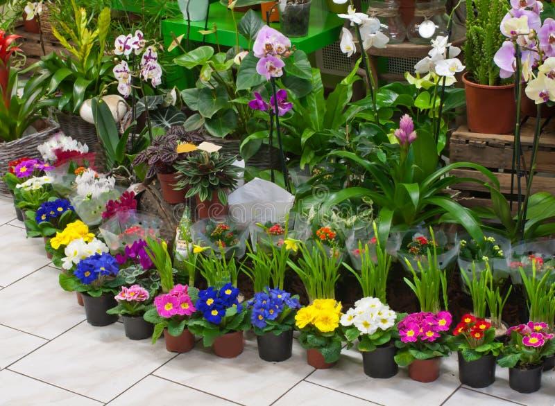 W kwiaciarnia sklepie obrazy stock