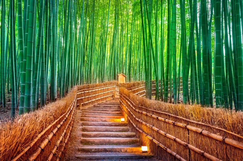 W Kyoto bambusowy las, Japonia obrazy royalty free