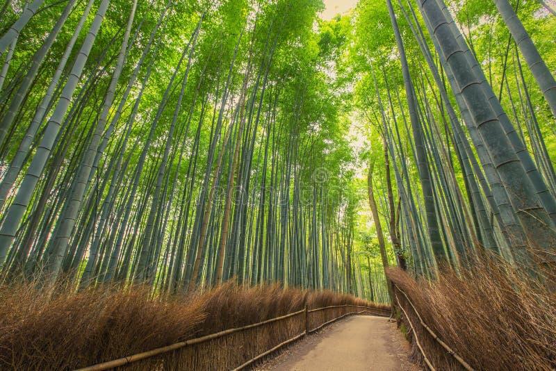 W Kyoto bambusowy las, Japonia zdjęcie royalty free