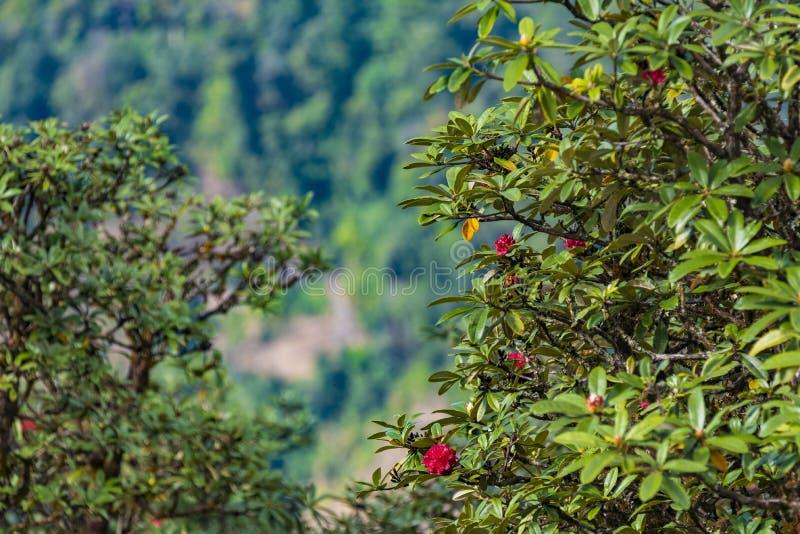 W lasowego natura skład obrazy stock