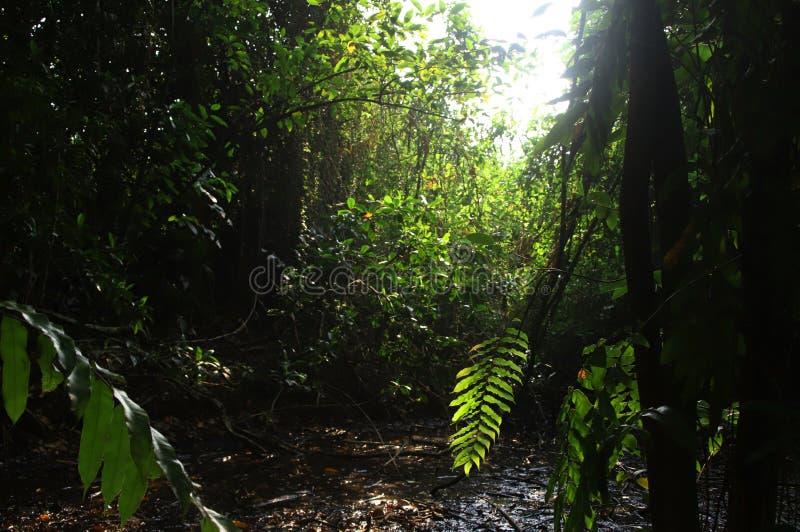 W lesie fotografia stock