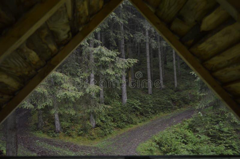 W lesie fotografia royalty free