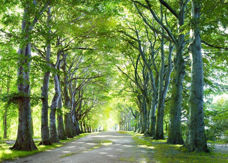 W lesie sposób obrazy royalty free
