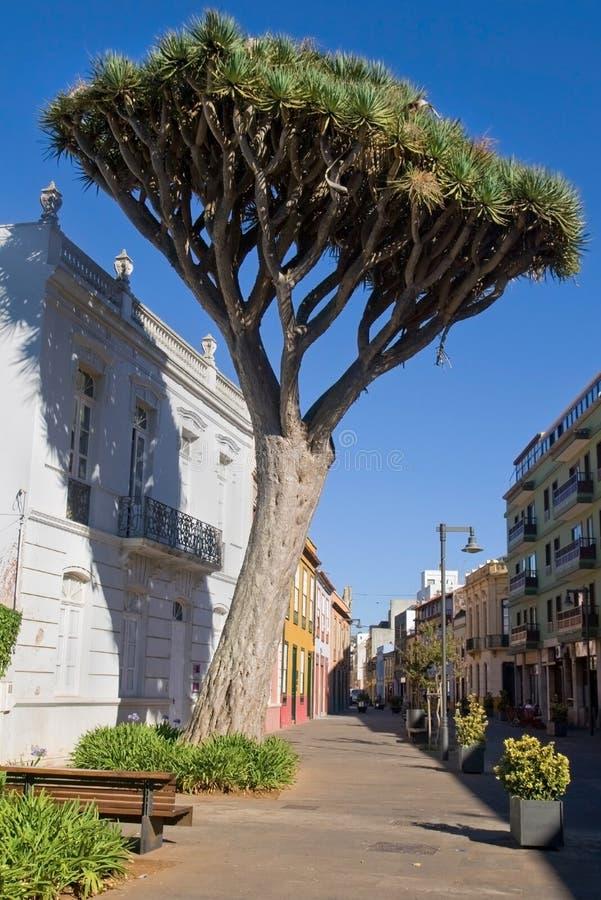 W Los Angeles smoka Drzewo Laguna zdjęcia stock