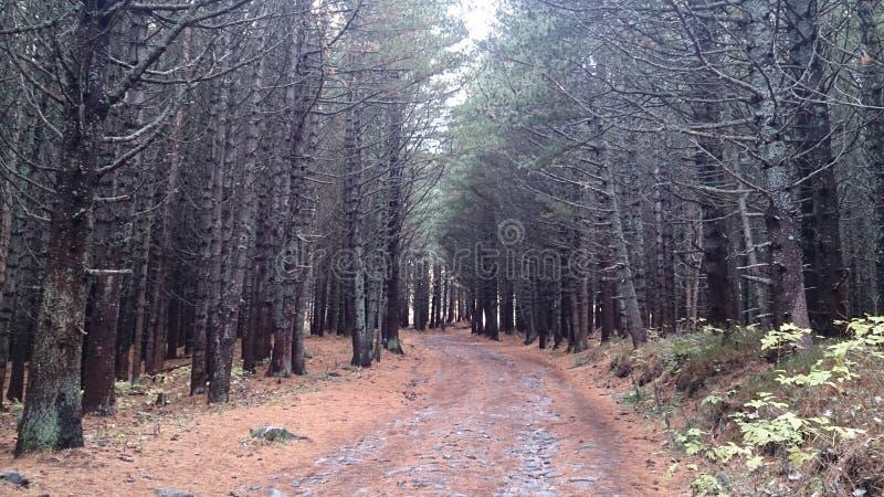 W małym lesie zdjęcie stock