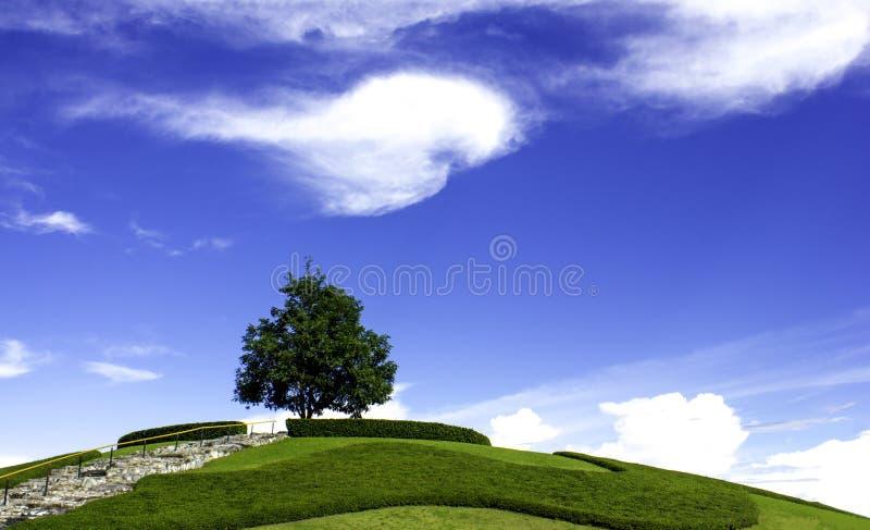 W nieba drzewie obraz stock