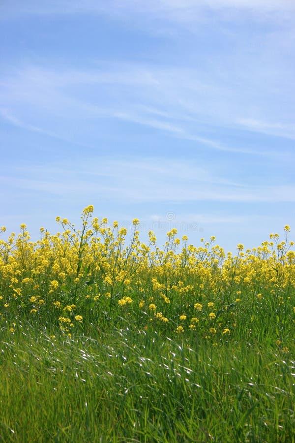 w niebieskich jasnych kwiatów światło żółte nieba zdjęcia stock
