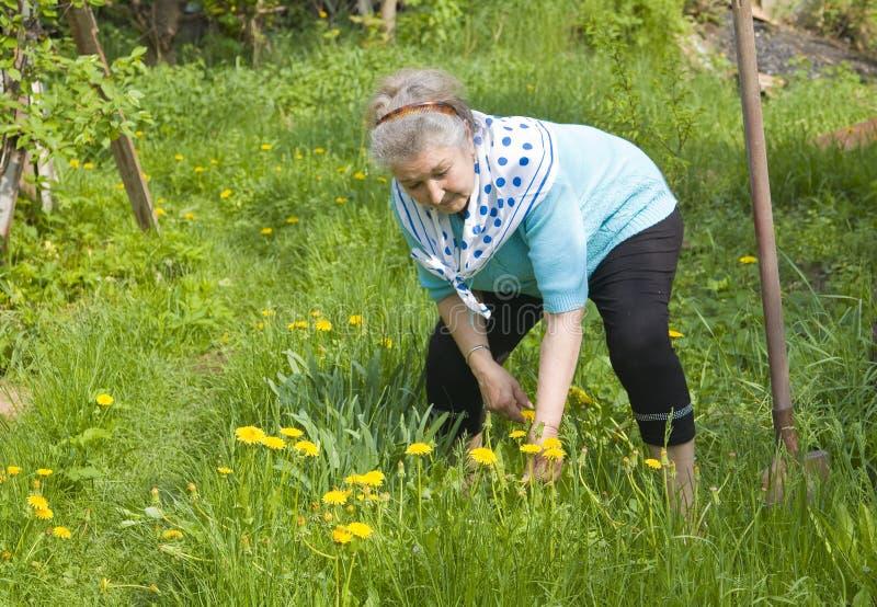 W ogródzie damy stary działanie zdjęcia royalty free