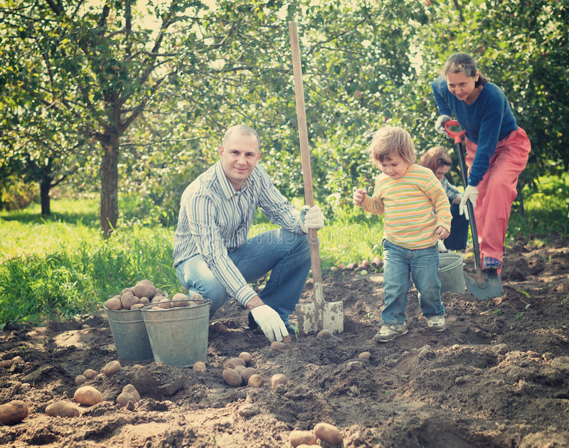 W ogródzie target362_0_ rodzin grule fotografia stock