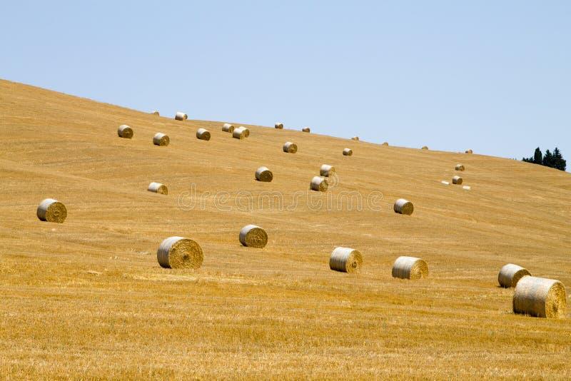 W?oska wsi panorama Round bele na pszenicznym polu fotografia stock