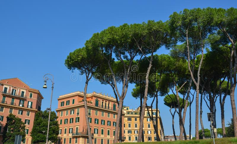 W?oski Kamiennych sosen Pinus Pinea w Rzym obraz stock