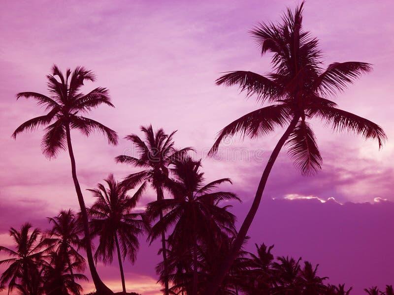 w ' palmie ' obrazy royalty free