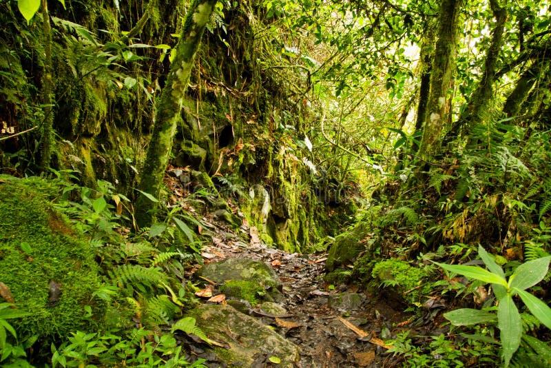 W Park Narodowy tropikalny tropikalny las deszczowy, Ekwador zdjęcia stock