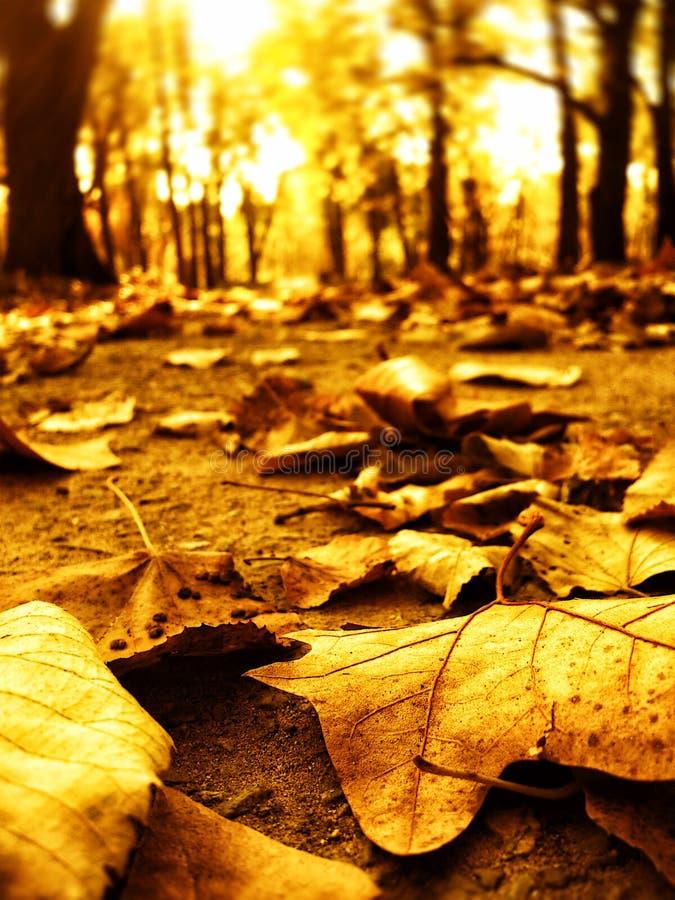 W parkowej ścieżce jesień liść