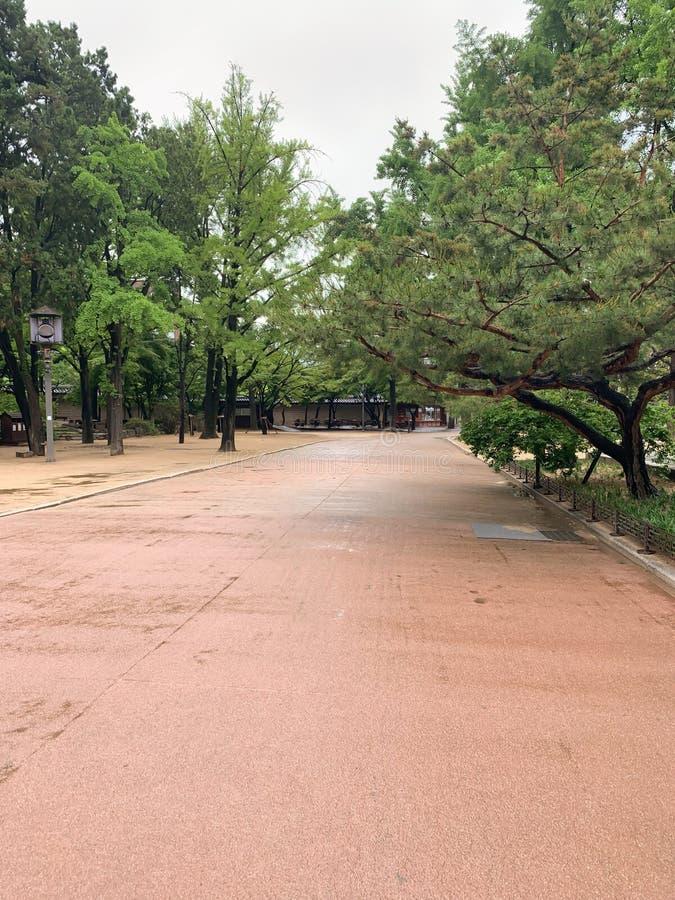 W parkowym zielonym drzewnym droga przemian zdjęcia stock