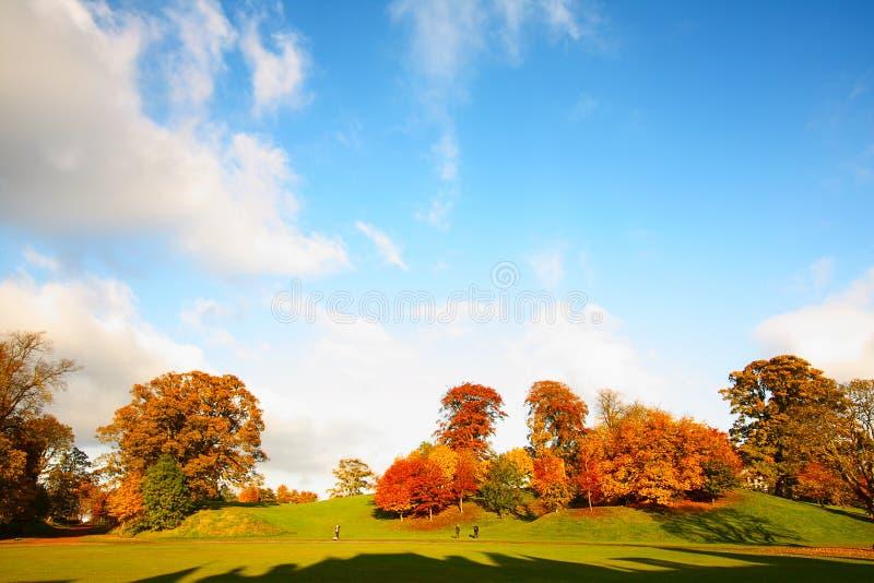 W parku cudowna jesienna scena zdjęcia stock