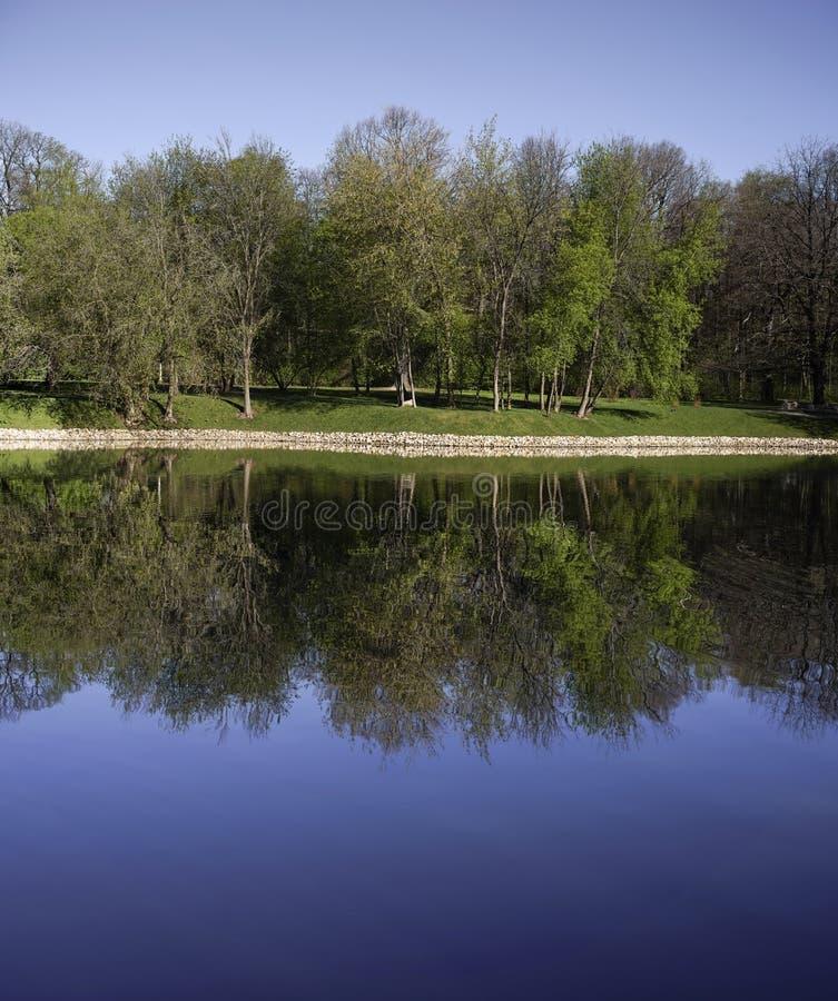 W parku jezioro obraz royalty free
