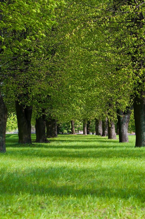 Download W parku zielony pas ruchu zdjęcie stock. Obraz złożonej z nikt - 23095028