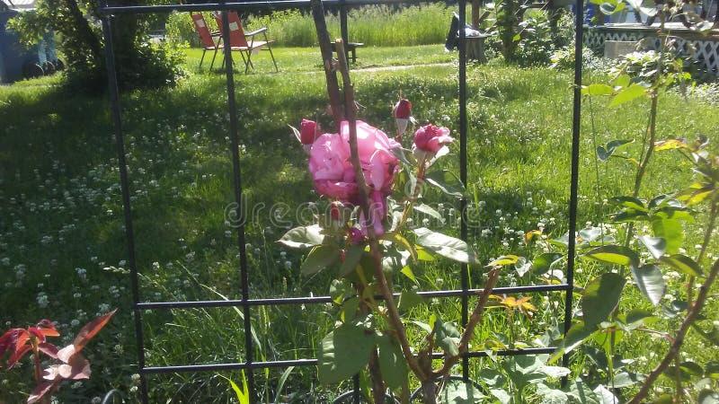 W pełnym kwiacie zdjęcie royalty free